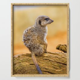 Meerkat (Color) Serving Tray