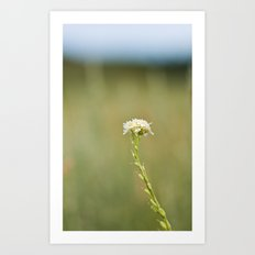 Flower in the Field Art Print