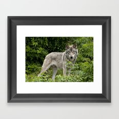 Secluded in the Forest Framed Art Print