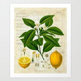 Lemon Botanical print on antique almanac collage Art Print