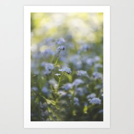 Forget-me-not meadow Spring Flower Flowers Floral Art Print