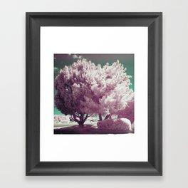 Bizarre Blossom Framed Art Print
