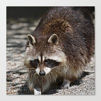 racoon Canvas Prints featuring Racoon by MehrFarbeimLeben
