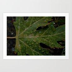 rainy leaf Art Print