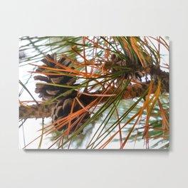 Pine Cone in Pine Tree Metal Print