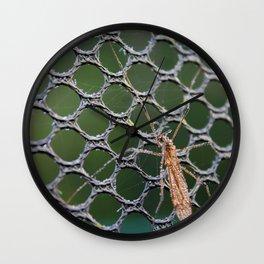 Mosquito macro Wall Clock