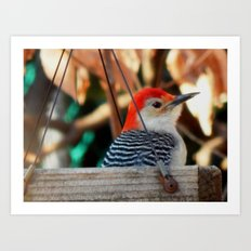 Woodpecker feeder Art Print