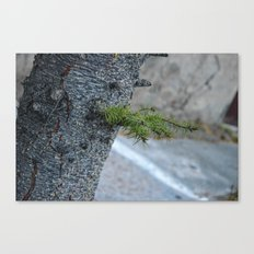 The detail of tree Canvas Print