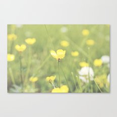 Yellow Flowers in a Field  Canvas Print