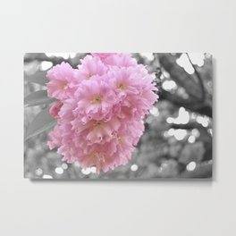 Cherry Blossom 1 of  3 Metal Print