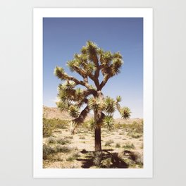 Joshua Tree (Color) Art Print