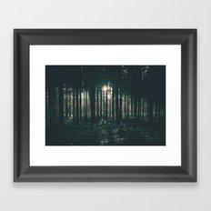 Sun through the Woods Framed Art Print