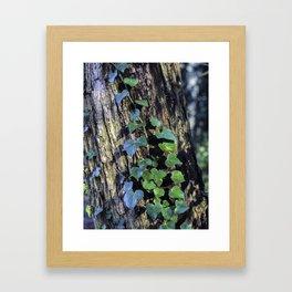 Ivy - Nature Photography Framed Art Print