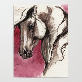 Andalusian horse on red background Poster