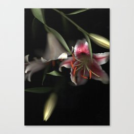 Flowering Lilies | Scanography Canvas Print