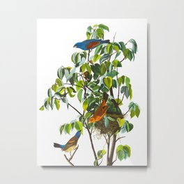 Blue Grosbeak James Audubon Vintage Scientific Illustration American Birds Metal Print