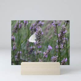 White Butterfly surrounded by Purple Lavender Mini Art Print