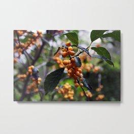 Longwood Gardens Autumn Series 27 Metal Print