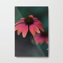 Echinacea Sunest Metal Print