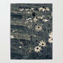 Country Flowers Poster