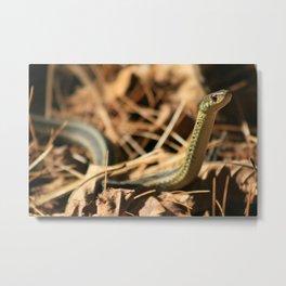 Garter Snake  Metal Print