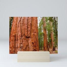 Sequoia Trees, McKinley Grove, California Mini Art Print