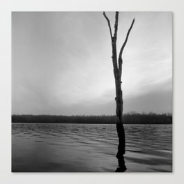 Stand Tall, Alone Canvas Print
