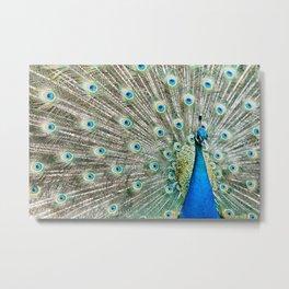 peacock Metal Print