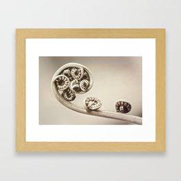 Circles of Life Framed Art Print