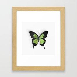 Botanical Bufferfly Green Framed Art Print