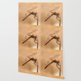 Painted Dragonfly Isolated Against Ecru Wallpaper