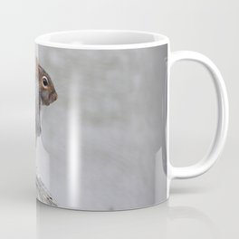 Observant Squirrel  Coffee Mug