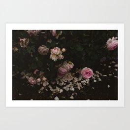 Rose Vine Art Print