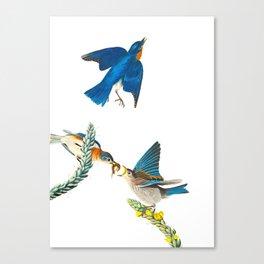 Blue Bird Vintage Illustration Canvas Print