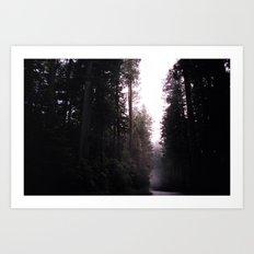 Redwoods Art Print