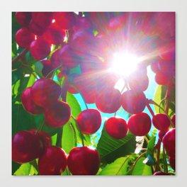 Summer Cherries Canvas Print