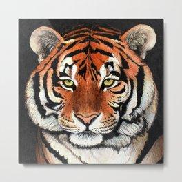 Tiger portrait drawing Metal Print