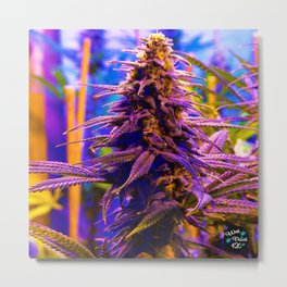 Purple Kush Kola Metal Print