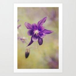 Columbine flower Art Print
