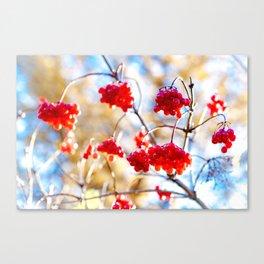 Arrowwood Berries Canvas Print