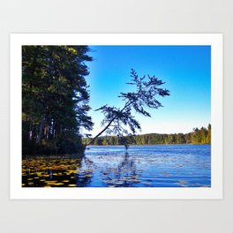 Crooked Tree on Moose Pond in Maine Art Print