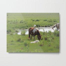 Chincoteague Wildlife Metal Print