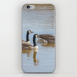 Canadian geese in the lake autumn (Branta canadensis) iPhone Skin