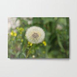 Dandelion in a spider's web Metal Print