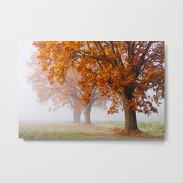 Oaks in the misty Autumn morning (Golden Polish Autumn) Metal Print
