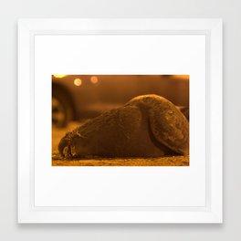 pigeon is relaxing... Framed Art Print