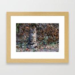 Sitting cat posing Framed Art Print