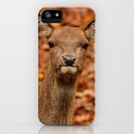 Autumn's Beauty iPhone Case
