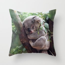 Amazingly Gorgeous Little Koala Bear Resting On Tree Branch Ultra High Resolution Throw Pillow