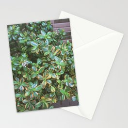 Potted Plant Love Stationery Cards